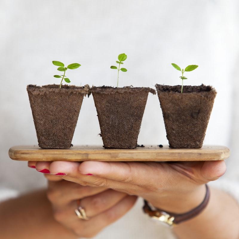 BTW op planten